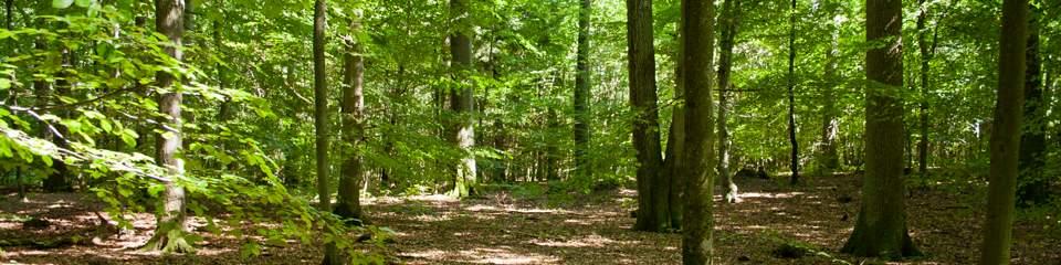 Pfälzer Wald bei Kaiserslautern